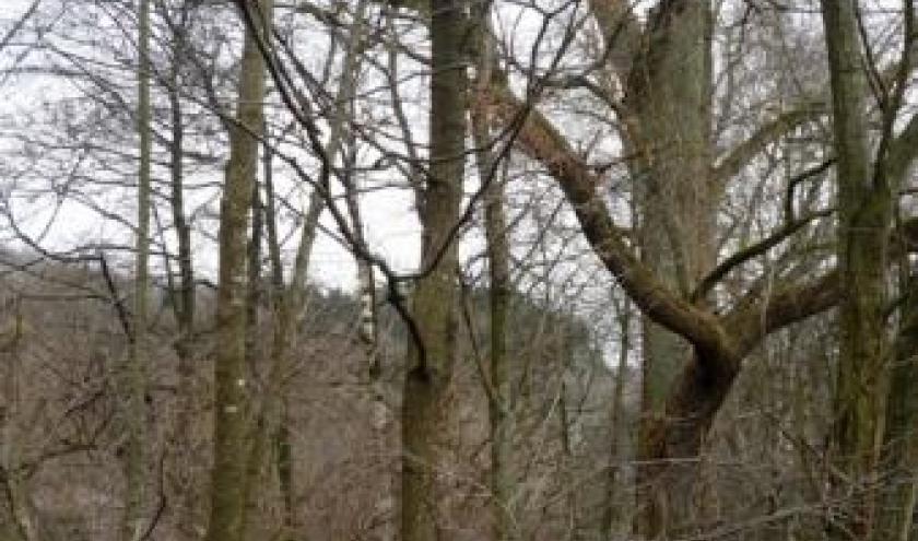 Des arbres de bonne hauteur qui devront etre abattus