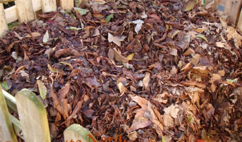 Tas de feuilles  en cours de ramassage
