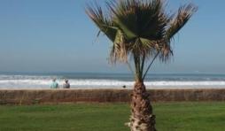 agadir plage riu tikida dunas