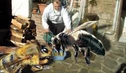 nourrissage d'abeille