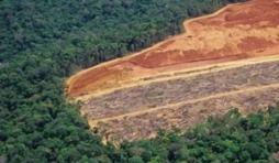 L'écologie à tout prix … et les revers de la médaille !