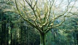 En forêt... (Récit fantastique)