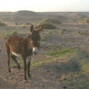 Un solitaire en avant-plan des premières dunes du desert et de la frontiere algerienne
