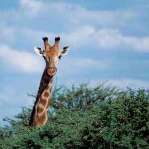 (c) Namibia Tourism Board