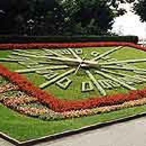 horloge florale