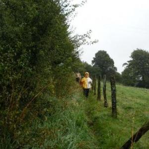 sur le sentier vers le moulin widart -23-