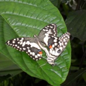 Au Jardin des Papillons