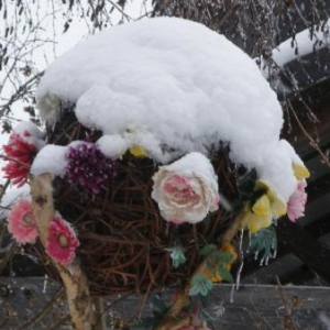 On approche de Houffalize, anachronisme floral (lotissement vers 1995-2000)