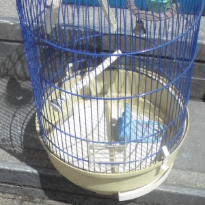 La cage du perroquet des frères Loiseau (Tintin)