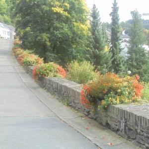 """Houffalize Minigolf  Rue de la Promenade. (sur sa montée) Le minigolf est à droite, avec des sapins """"qui s'arborent"""""""