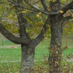 Houffalize Minigolf  Arbres remarquables (automne)
