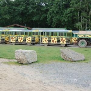 Petit train pour Safari