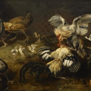 Combat de coqs,  Frans Snyders (1579-1657), © Hugo Martens