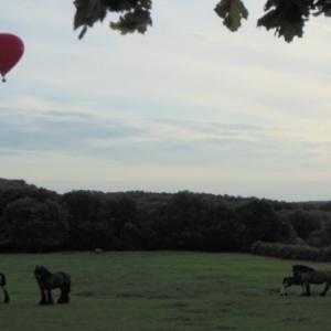 la montgolfiere survol des chevaux de trait