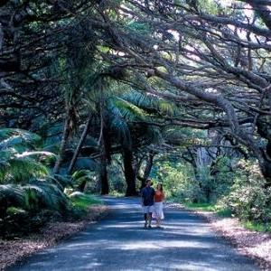 Marche sous Bugnys - (c) Nouvelle Caledonie Point Sud