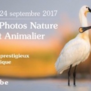 "Expos Photos Nature d' ""AVES"", à Namur, du 21 au 24 Septembre"