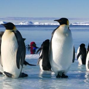 """""""Antartica, sur les Traces de l Empereur"""""""