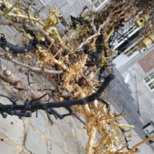 """""""Arbre a Vie""""/Installation florale de Thierry Boutemy/""""TreM.a"""""""