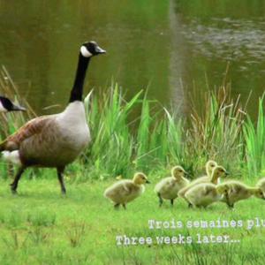 """""""Giving Nature a Home"""" dernier film de Marcel Thonnon"""