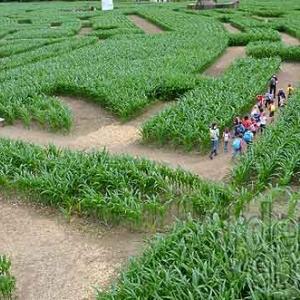 Labyrinthe de Barvaux-7589