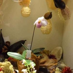 orchidee-5355
