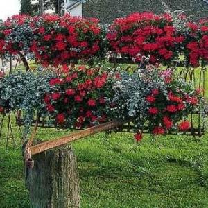Concours entente florale europe - 035