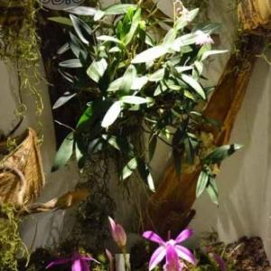 orchidee-5366
