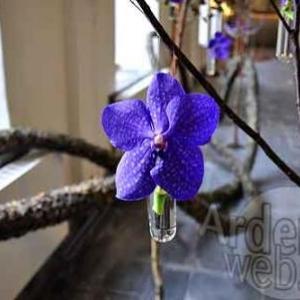 Belgian flower arrangement society -photo 10