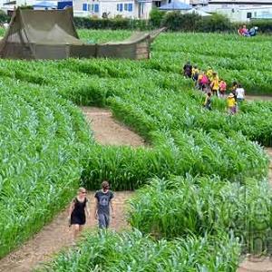 Labyrinthe de Barvaux-7578