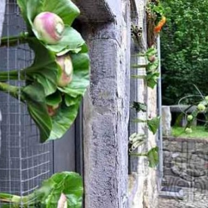 Belgian flower arrangement society -photo 134