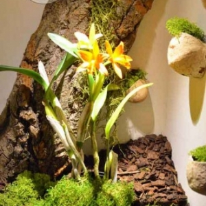 orchidee-5365