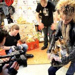 concours du plus beau chien du monde - video 4