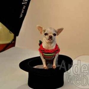 le plus beau chien du monde - 041