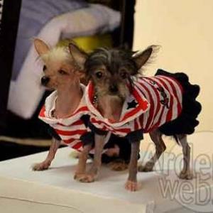 concours du plus beau chien du monde - video 10