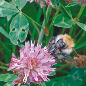Nos plantes sauvages  Comment les récolter, les cuisiner et les utiliser en remèdes