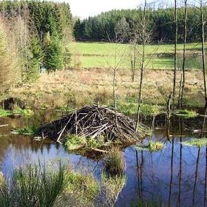 Excursions à Houffalize au Pays des Castors avec Olivier Rubbers