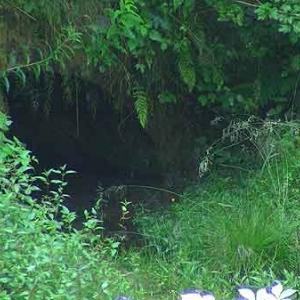 Canal de Bernistap