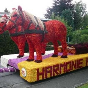 205  De magnifiques chevaux de trait au debardage