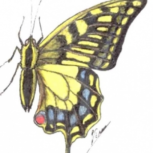 initiation insectes