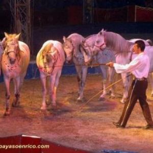 Le Cirque Universal