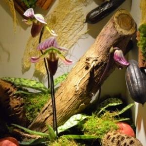 orchidee-5362