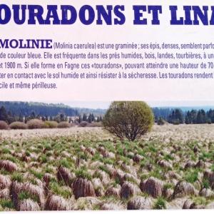 Touradons et Linaigrettes