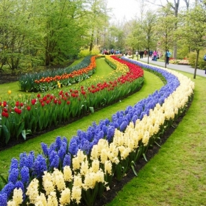 Keukenhof ( NL ) ( photo F. Detry )