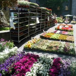 MALMEDY              15ème édition de la  Fête des Fleurs et du Jardin