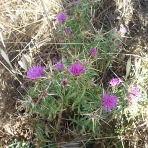 La flore du site ( Photo F. DETRY )