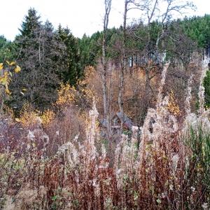 Nature en bord de  Warchenne
