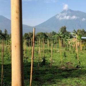 Paysage du pays des volcans ( Photo RTBF)
