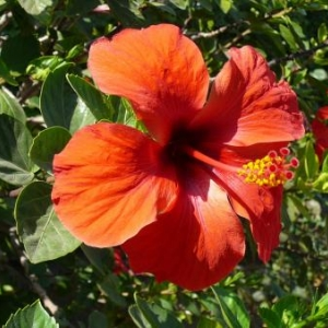 Peloponese : presqu'ile fleurie