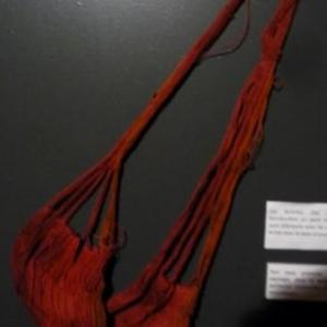 Les femmes Zoe portent toutes en bandouliere un petit hamac pour bebe, fabrique avec du coton sauvage et teint avec la baie d'urucum