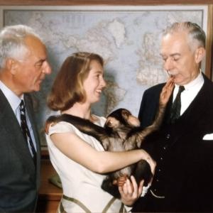 John Fletcher | Washington, D.C. | 1962 Lors d'une visite au quartier général de la National Geographic Society, Jane Goodal l et le chimpanzé Lulu, du Zoo national, rencontrent Melvi l le Grosvenor (à gauche) et Leonard Carmichael , président du comité de recherche.